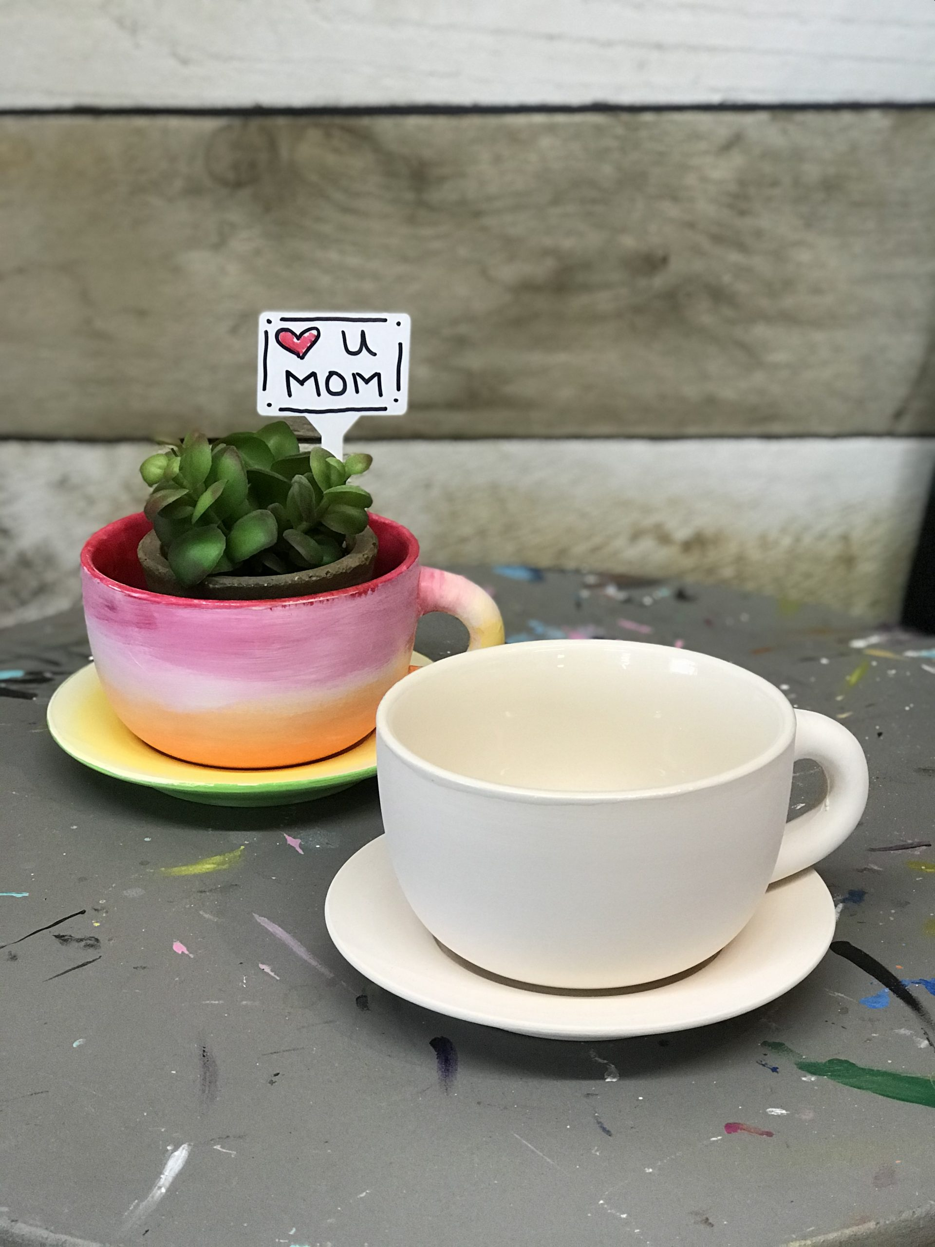 Ceramic Cup And Saucer Planter Paint Kit Art Studio 27